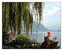 Montreux Wallpapers Sfondi per Desktop 1280x1024 - 1024x768