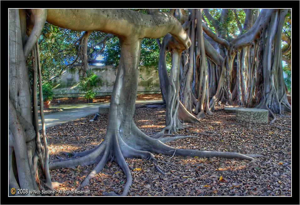 Orto Botanico Di Palermo Botanical Garden Foto Photos