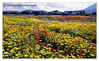 "Scopello - TRAPANI ""Fields in a spring day..."""