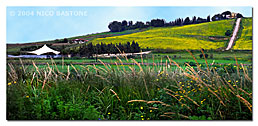 "Menfi Agrigento ""Fields"""
