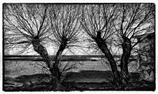 "Mondello, Palermo ""Panorama con alberi in un giorno d'inverno"" Seascape with tree in a winter day"""