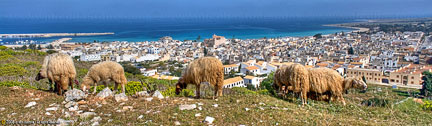 "San Vito Lo Capo, TP ""Panorama con pecore"" - ""Landscape with sheeps"" - 2400x700"